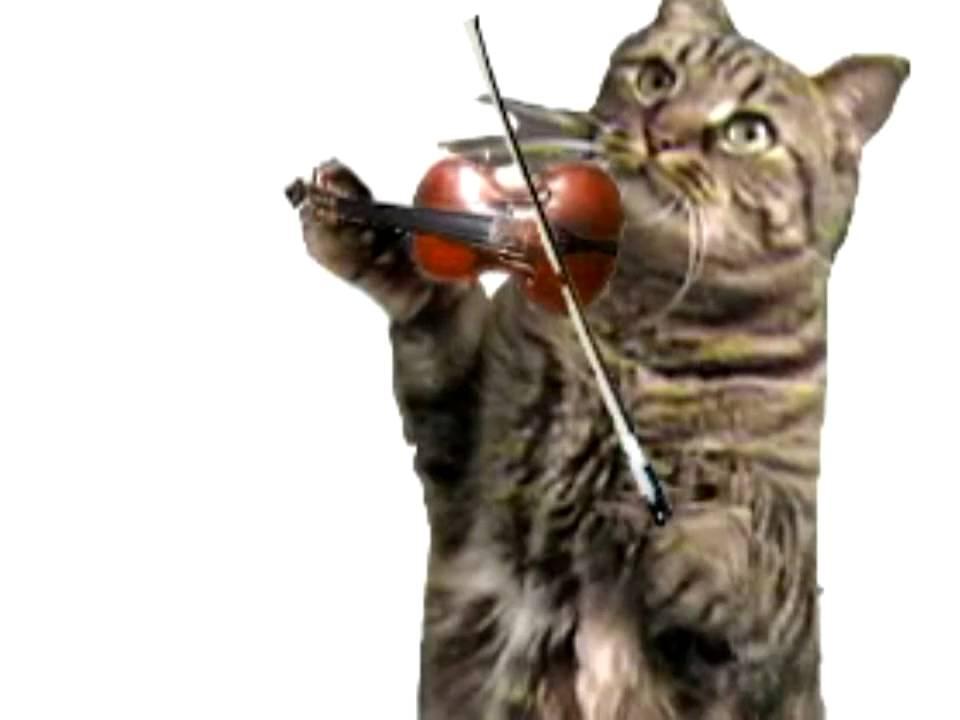 Happy Birthday Song Violin Kitty