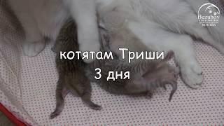 Котята: от рождения до первого месяца // Часть 1. Первые 10 дней жизни котят.