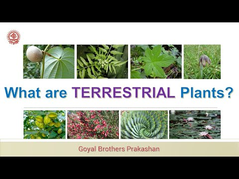 What are Terrestrial plants?