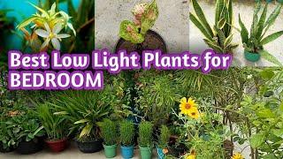 ये सब पौधा घर के अंदर अंधेरे में भी आसानी से सालो साल जिंदा रहते है   Plants can grow in dark Light