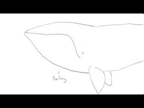 Right Whale: Clip of the Week