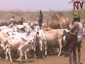 Karamoja forced to share scarce water with Turkana herdsmen and their cattle from Kenya
