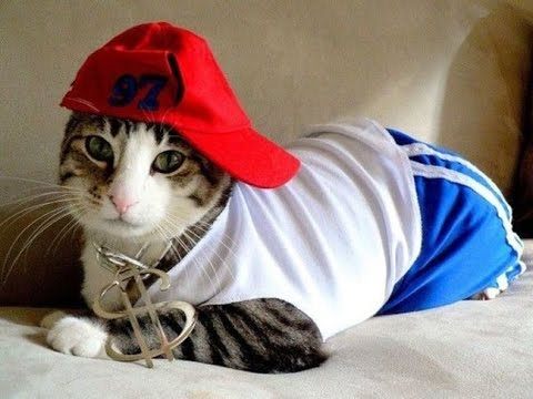 NEW FUNNY VIDEOS – Cats Do Love Hip Hop – Funny Cats – Funny Cat Vines