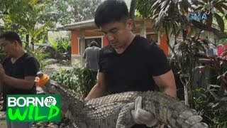 Born to Be Wild: Doc Ferds' rescues a 47-year old crocodile