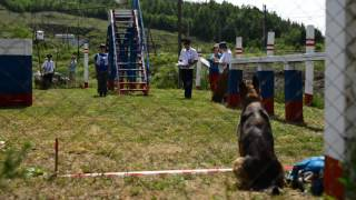 Турнир собак из охраны РЖД в Ревде, Ri-tv