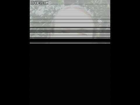 Формат видео WebM