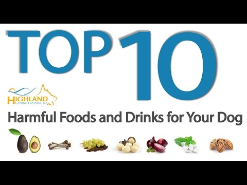 Top 10 Harmful Foods for Dogs