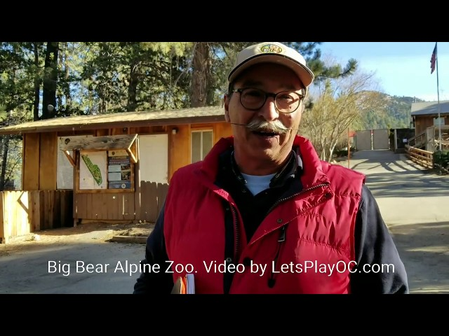 Big Bear Alpine Zoo with Curator #LiveItUpBigBear AD