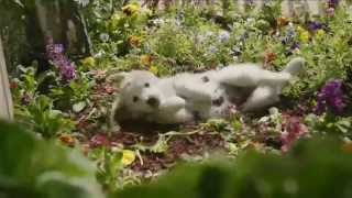 TV Commercial - PetSmart Keep Your Puppy Going Strong - Inspired By Pets