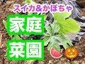 【植物】実がなったら優勝?!