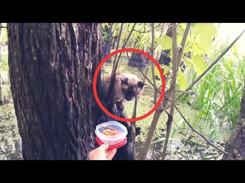 A Bird Watcher Was In A Louisiana Swamp When He Spotted This Creature Crying Wretchedly In A Tree