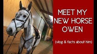 """MEET MY NEW HORSE """"OWEN"""""""
