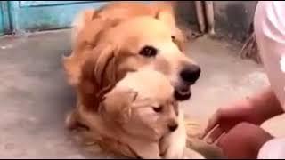 Посмотрите как животные 🐵🐻🐶 проявляют любовь к своим детям❤🌺