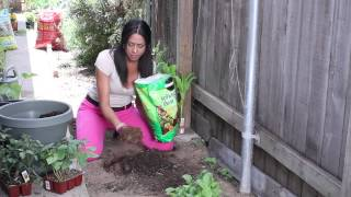How to Plant Vegetables in Clay Soil : The Chef's Garden