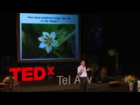 Video image: Natural pest control ... using bugs! - Shimon Steinberg