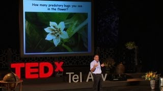Natural Pest Control ... Using Bugs! - Shimon Steinberg