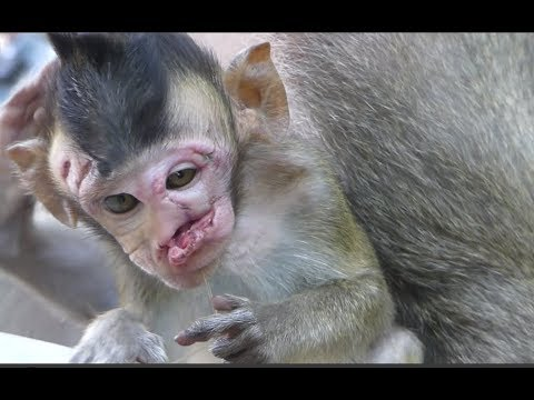 Why Why? This world unfair for poor this baby monkey, I cry cry cry too much cos pity little monkey