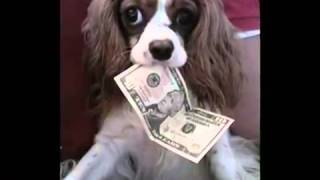 Rich Pets!