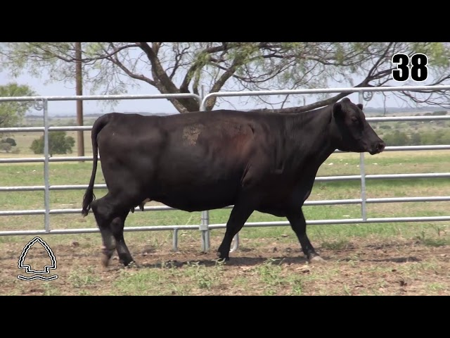 Pearcy Angus Ranch Lot 38