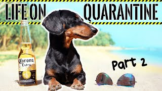 Ep#2: Life on QUARANTINE - PART 2 (Funny Dogs Staying Home!)