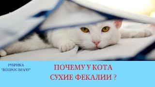 26.01.18 У кота сухие фекалии