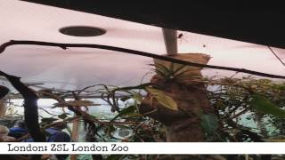 ZSL London Zoo (60 Second Review)