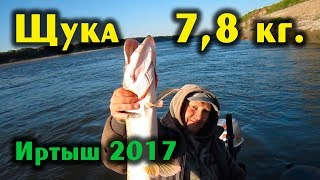 Рыбалка на спиннинг на Иртыше. Места, снасти, улов