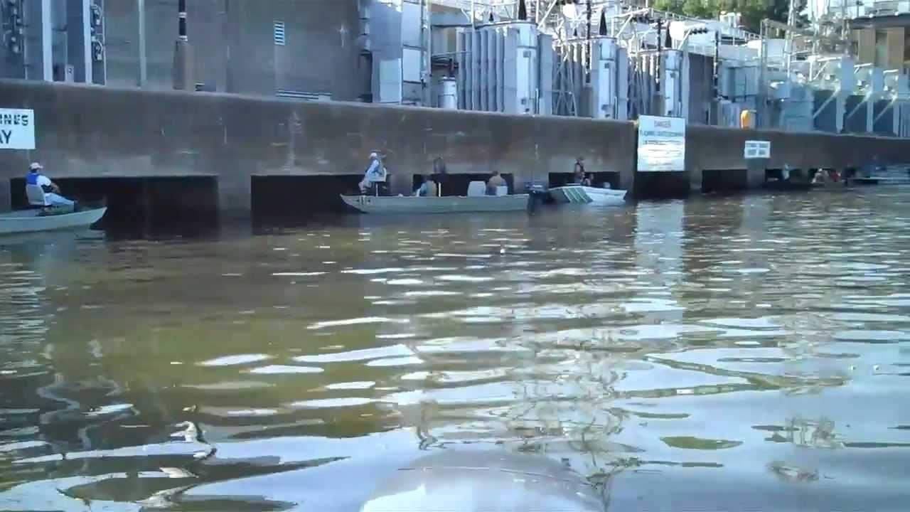 Fishing at wheeler dam alabama youtube for Wheeler lake fishing report