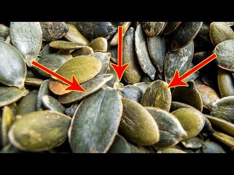 Вопрос: Можно ли давать курам тыкву и тыквенные семечки В каком количестве?