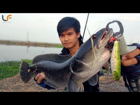 (ตอนที่ 41) ตกชะโดด้วยเหยื่อเพนชิว ไซร์สวยงัดกระจาย Sushi(LF) #Pong Posamton