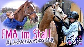 Lia & Alfi - FMA im Stall und 1. Adventverlosung