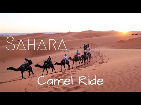 Sunset Camel Ride in the Sahara - Morocco