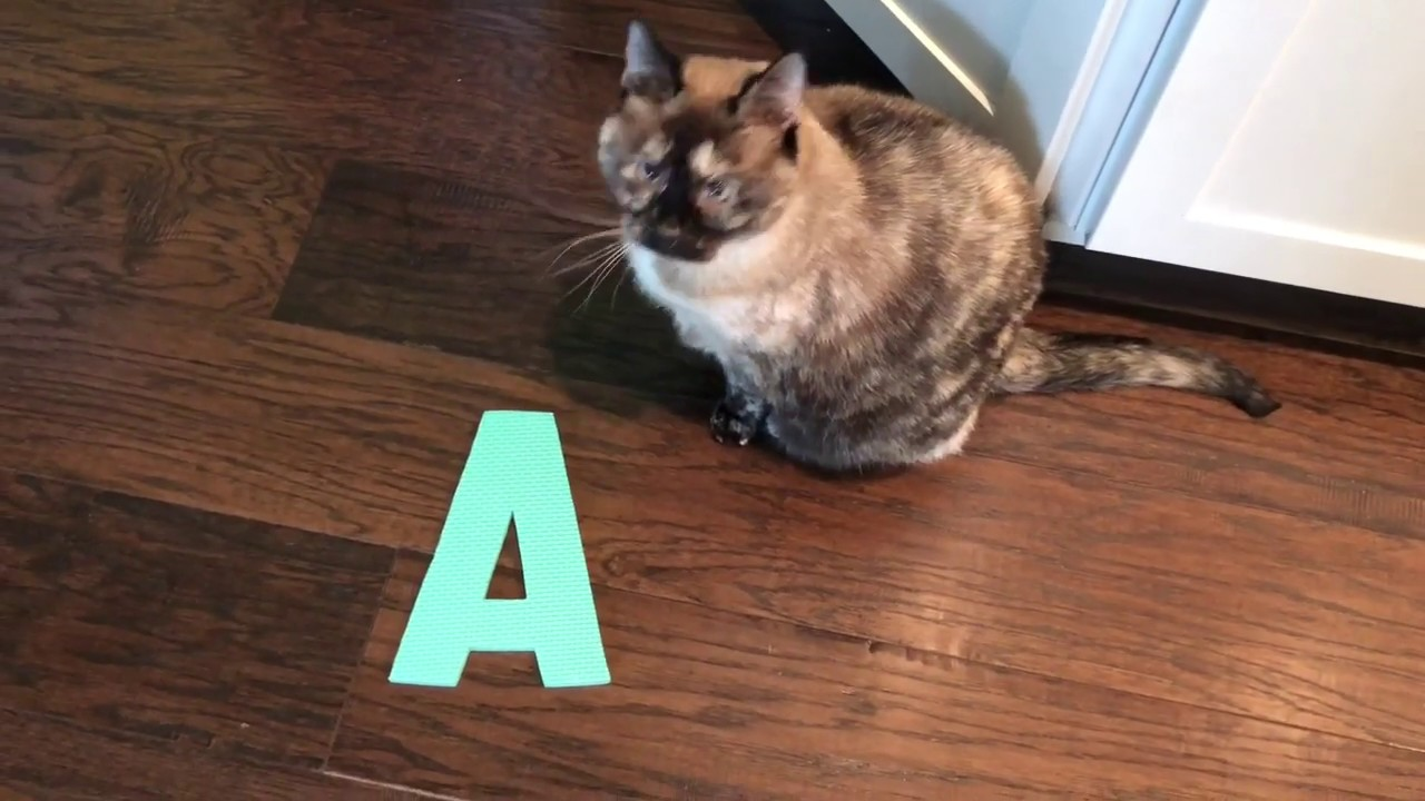 Moxy the Cat and the letter A