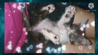 Lilo the litte cute funny Cat||With Stitch  Big Brother