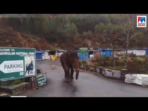 മൂന്നാറിൽ വന്യജീവി ആക്രമുണ്ടായാൽ നടപടിയെടുക്കാൻ ദ്രുതകർമ സേനയ്ക്ക് വാഹനം | Munnar Wild Animal Attack