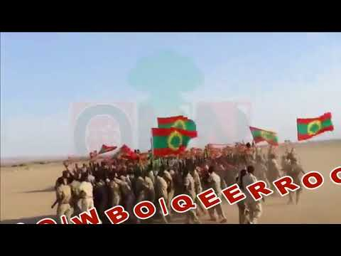 New Oromo Music: ABO-WBO-QEERROO Maaltu Caalaa?