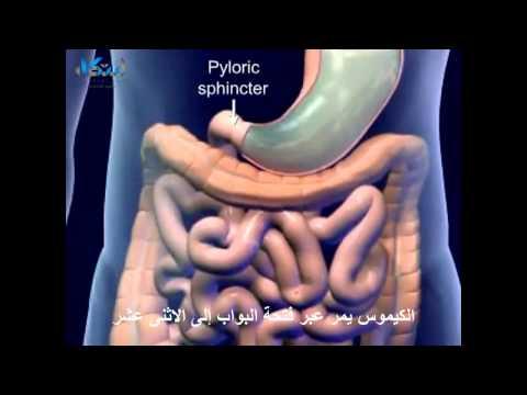 الجهاز الهضمي ورحلة الهضم