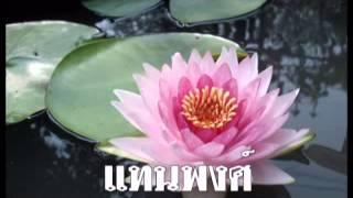 บัวตูมบัวบาน : สายัณห์ สัญญา