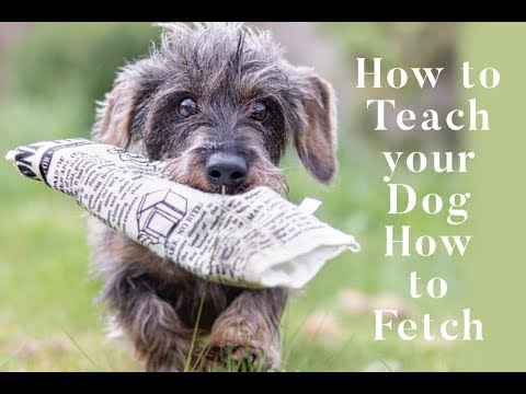 how-to-teach-your-dog-how-to-fetch-(dog-news-stories)---pet-qwerks-toys