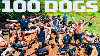 WE ADOPTED 100 STRAY DOGS FROM A SHELTER!