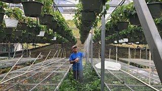 Солнечные батареи спасли теплицы пуэрториканца после урагана Мария новости