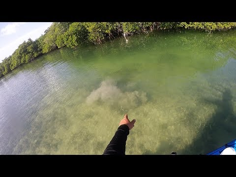 Shark Channel Recon - Just A Bunch Of Hooking