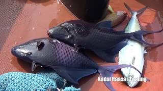 Amazing Deep Sea Fishing | Early Morning Fishing