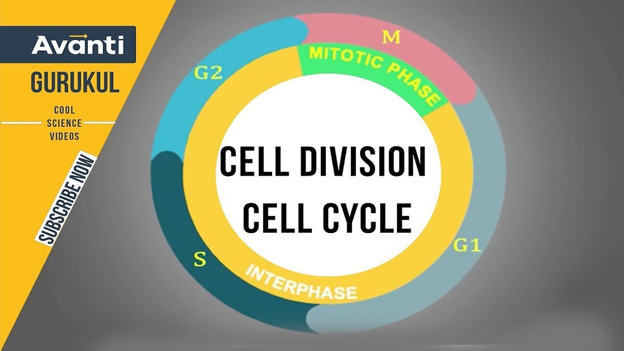cell division cell cycle interphase g0 g1 g2 s phase class 11 biology [ 1280 x 720 Pixel ]