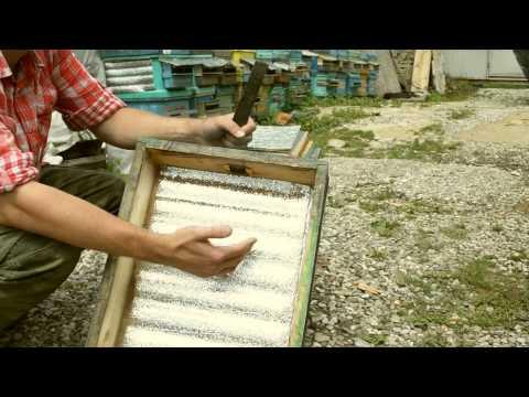 пчеловодство, с чего начать?