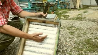 пчеловодство, с чего начать.  №1