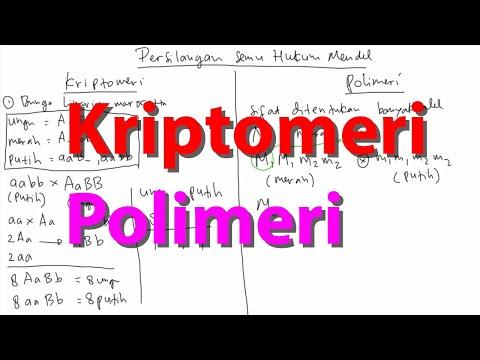 Video Pembelajaran Persilangan Kriptomeri dan Polimeri