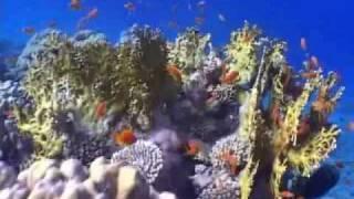 Egitto - Immersione nel Mar Rosso a RAS MOHAMED