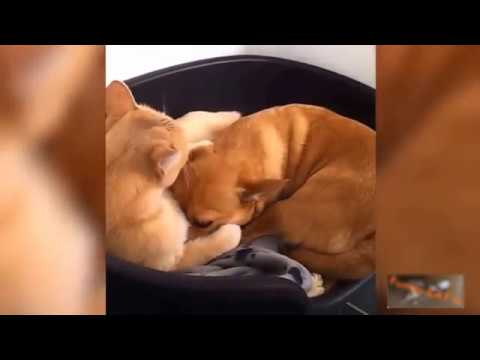 Cats and Dogs sleeping together in one Bed funny Compilation | Dog Training System