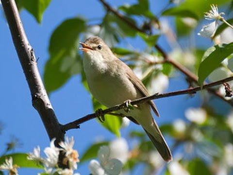 Птицы юго запада сибири